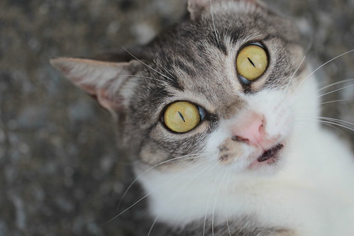 Cat - beautiful eyes