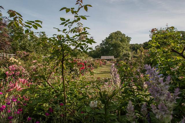Brooklyn Botanic Garden June 2014 Flickr Photo Sharing