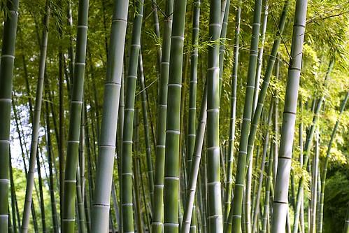 digital zeiss canon eos 50mm planar carlzeissplanart50mmf14aej 大阪市立長居植物園
