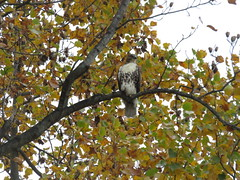 Watching the meadow work like a hawk!