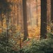 Autumn themed forest (explore) by desomnis