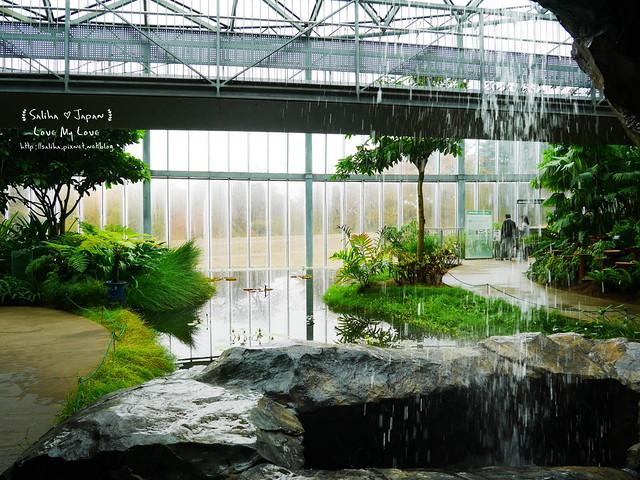 日本東京景點新宿御苑溫室植物 (24)