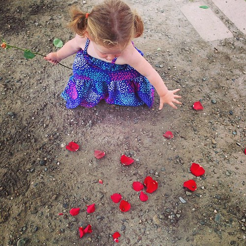 Red, white or red #fmsphotoaday Rose Destruction! Some sweet lady gave Molly a rose. 5 seconds later she destroyed it.