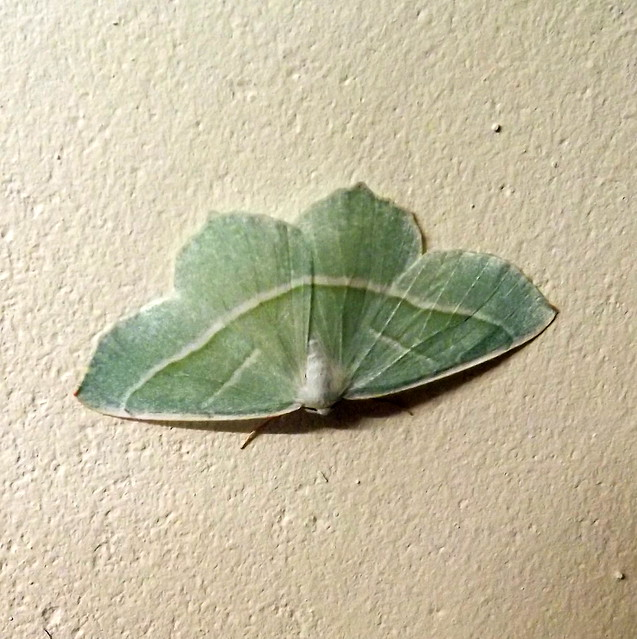 Green Moth On Magnolia, Fujifilm FinePix S3380