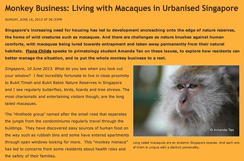 Monkey Business: Living with Macaques in Urbanised Singapore - Nature & Biodiversity - Gaia Discovery Eco Living Sustainable Tourism Heritage