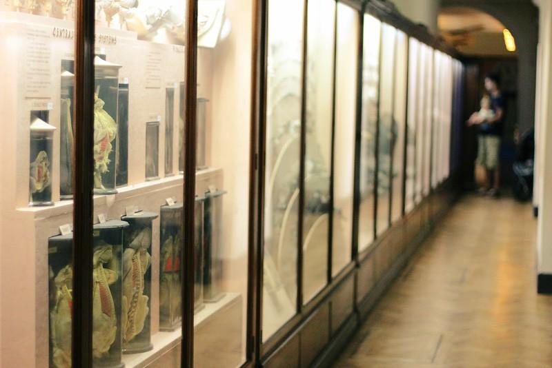 horniman natural history museum