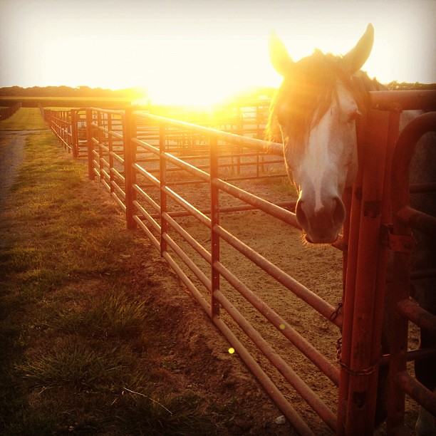 Chillin' on This Perfect Evening #horse #stable