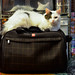 Suitcase/Cat Bed by MellieRene4