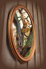 Tree in the Mirror
