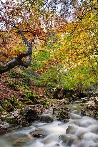 autumn trees sunset españa fall water landscape spain agua árboles europa europe paisaje otoño león beech anochecer haya castillayleón hayedo ciñera faedo beechforest castileandleón