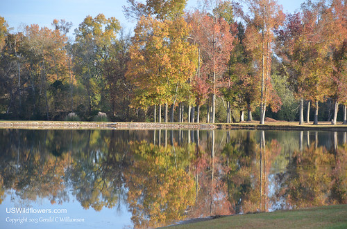 Reflections of Fall (2)