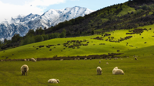 New Zealand Splendour