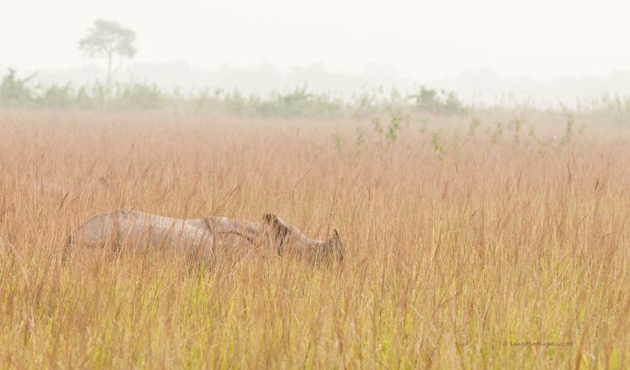 Rhino-col