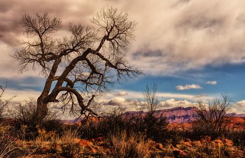 tree nature landscape desert moabutah phototour professorvalley ©jeffrclow jeffclowphototour moabphototour