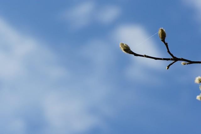 写真_クモの糸が・・・2