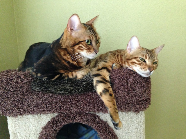 Peaches and Koa
