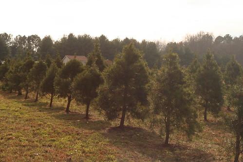 Tree2013 (2)