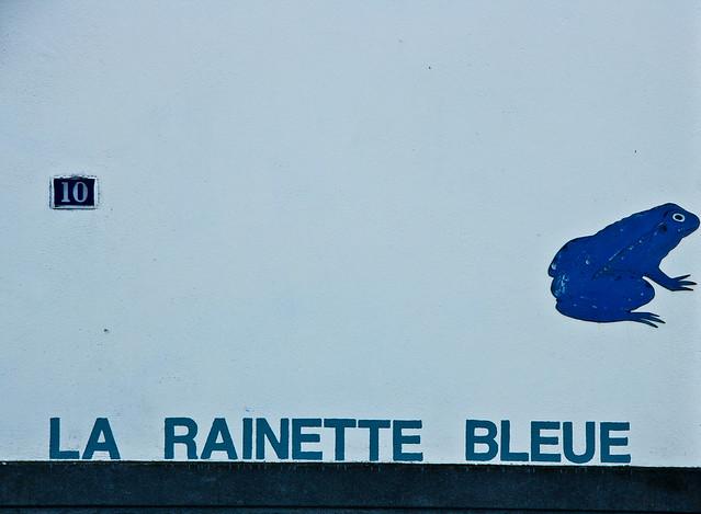 Rainette bleue
