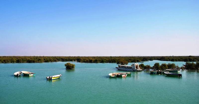 21 Manglar en Tabi en la Isla de Qeshm (41)