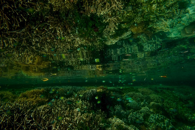Raja Ampat underwater