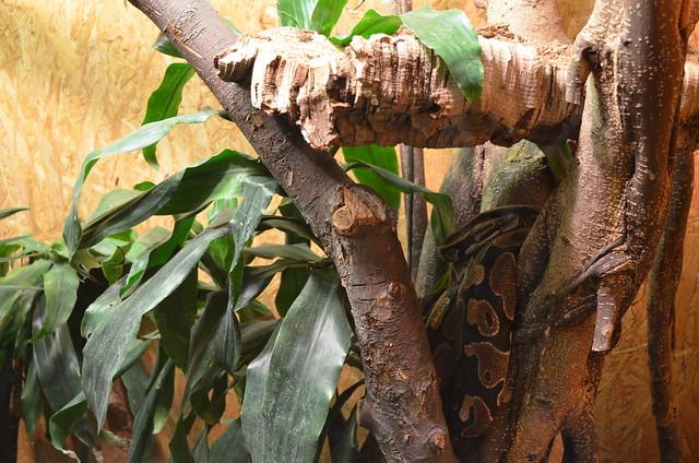 Biosphaere Potsdam Python snake