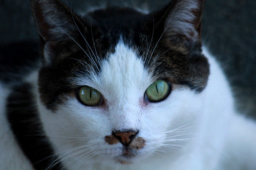144169-1.jpg by Robert W Gilcrease