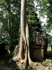 Ta Prohm - Settling In