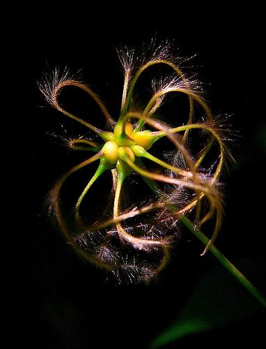 A flower !!!!