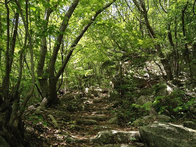 瓢ヶ岳 登山道 石段