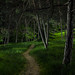 enchanted forest - lightpainting by Ralph Oechsle
