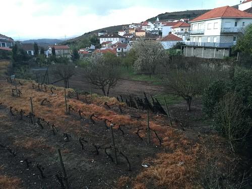 2016-04-16-Vallee-du-Douro-239
