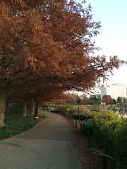 Washingtonian fall