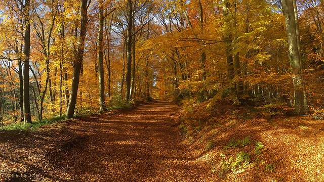 Autumn awesome colors