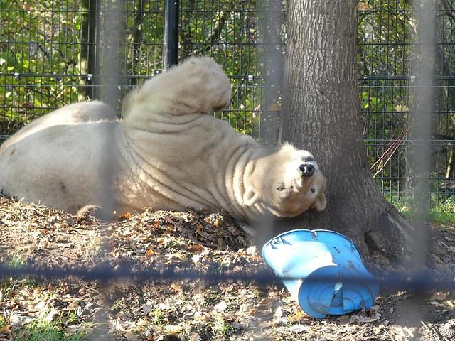 Eisbär Felix, Aqua Zoo