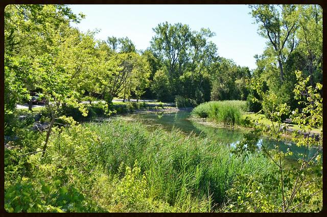 La Végétation et La Rivière Outlet. 22-08-2016 10:35