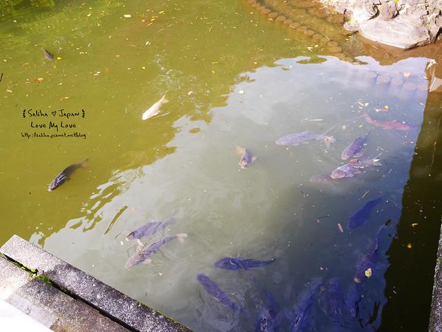 日本東京自由行新宿御苑庭園景點 (26)