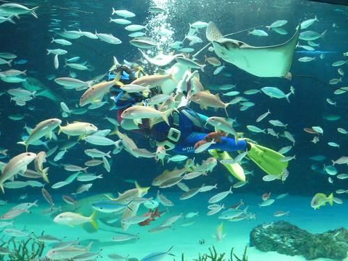 水中パフォーマンスタイム@サンシャイン水族館