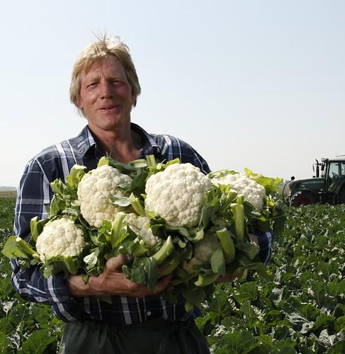 De bloemkolen van Arie Slagter uit Andijk