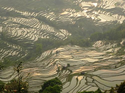 Yunnan13-Yuanyang 24-Bada (15)