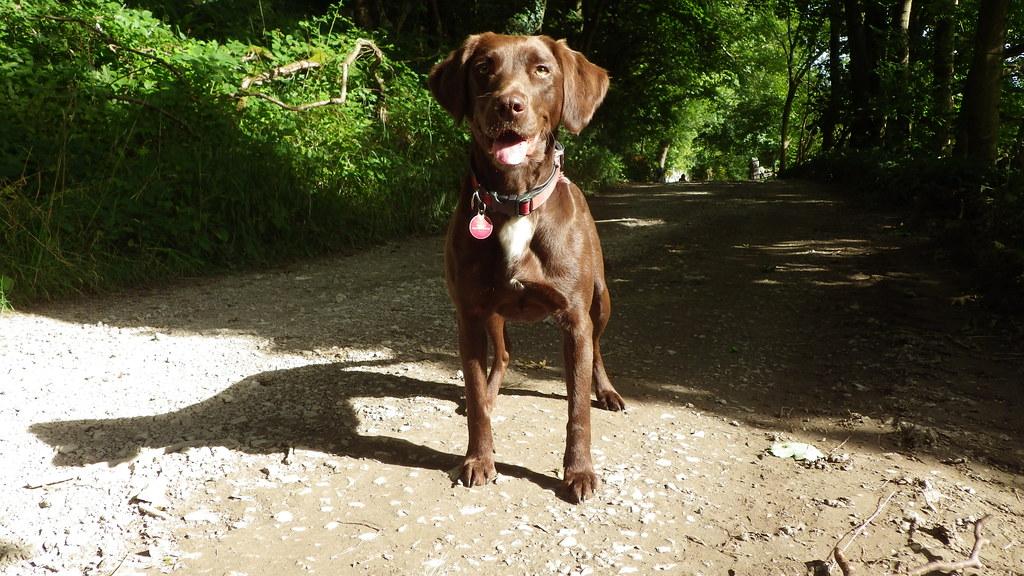 Elsie dog