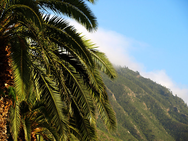 Palm Tree, Tenerife