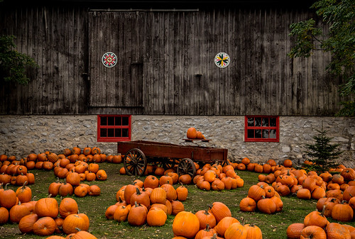 Stroms Farm - Guelph by Karyn Stepien Photography