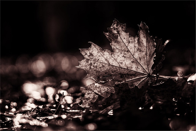 FV Flickr Top 5; 2-29: leaf
