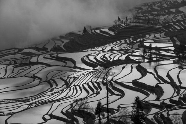 Rice Terrace in Yuanyang