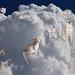 Mi pequeño Duma en el cielo  /  My little Duma in heaven by María Pilar_trl - Off