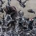 L'homme qui murmurait à l'oreille des pigeons 2 Beaubourg Paris France Nov 2013 by roubinoff_