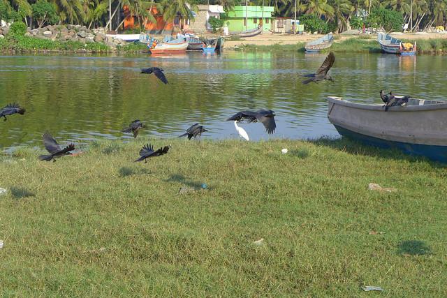 India-Kerala-near Kovallam - fishermen area