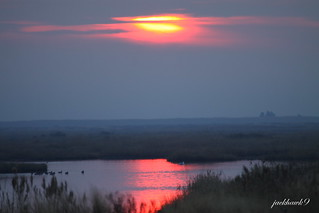"""Good Morning From Edwin B. Forsythe National Wildlife Refuge"""