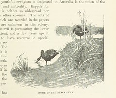 """British Library digitised image from page 179 of """"Cassell's Picturesque Australasia. Edited by E. E. M. With ... illustrations"""""""