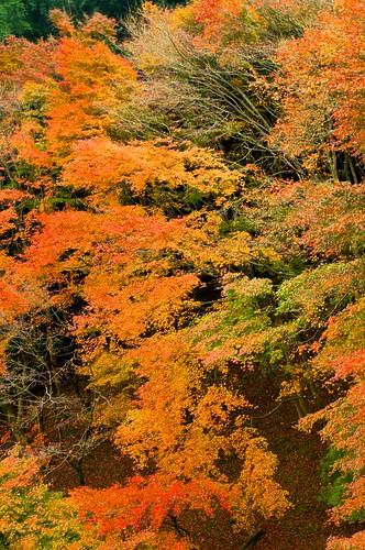 autumn nature japan pentax kr 365 fukuoka kyusyu autumncolor kitakyusyu project365